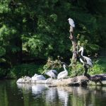 02-hagenbecks-tierpark_lk_126